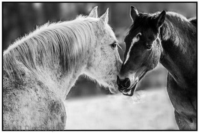 03_FFF-Begegnung_Pferde