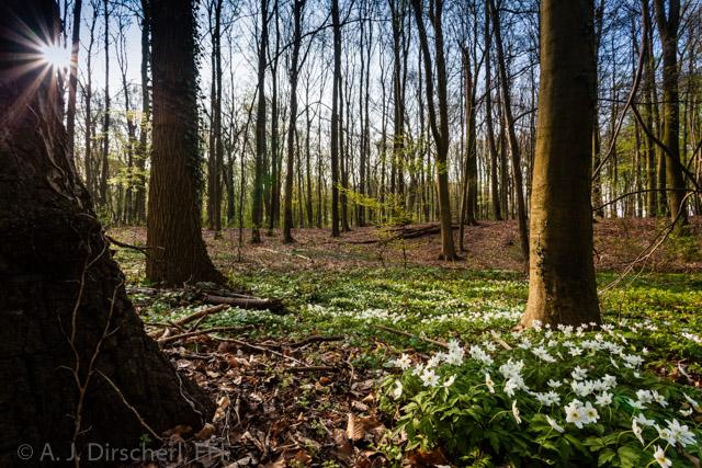 Fruelingswald_Dorney-2453