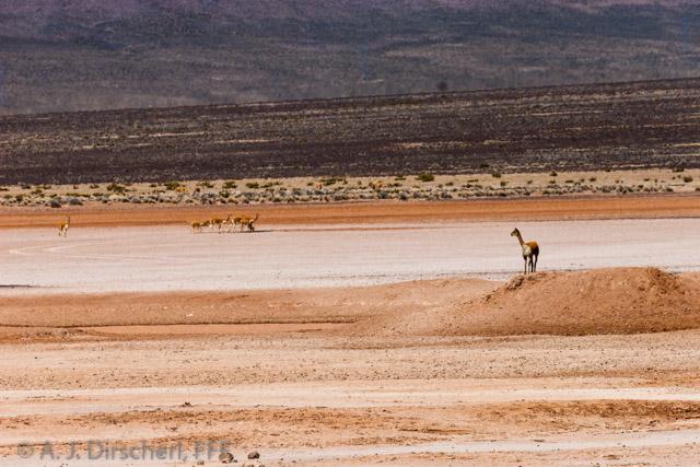 Peru_Altiplano-9653