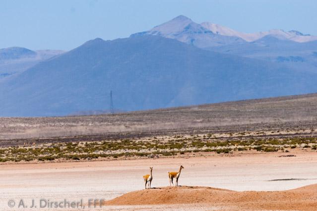 Peru_Altiplano-9661