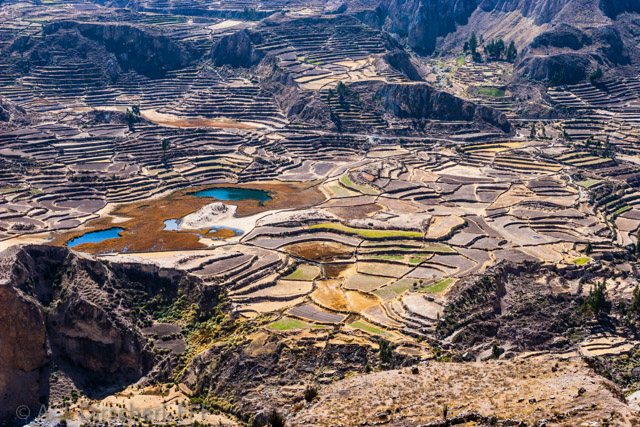 Peru_Colcatal-0119