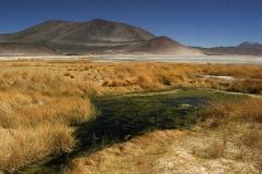 Salar_Aguas_Calientes_Chile-0913GI